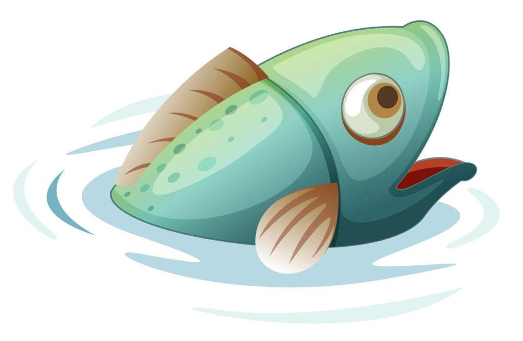 Рыба из воды